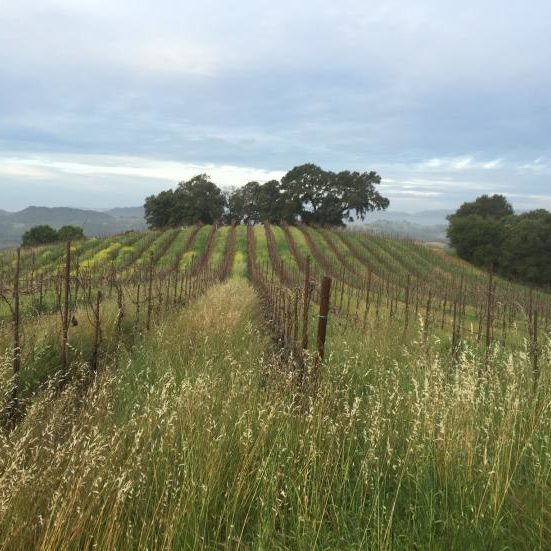 AVV vineyard